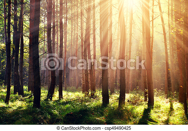 Forest with sun rays. - csp49490425