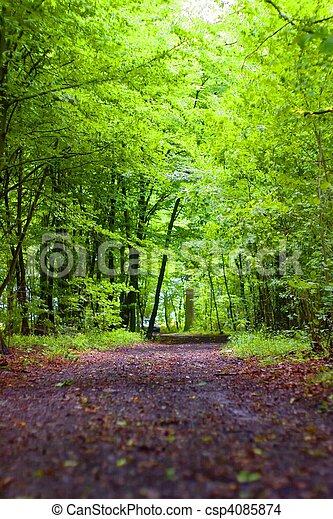 foresta - csp4085874