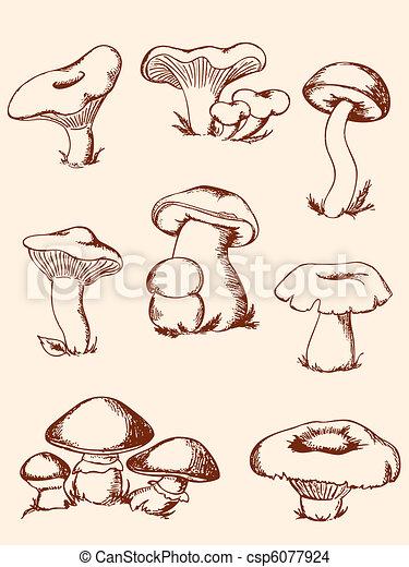 foresta, funghi, vendemmia, set - csp6077924