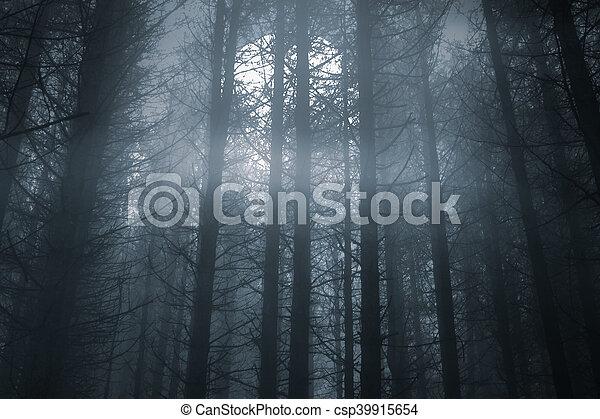foresta, luna piena, nebbioso, notte - csp39915654