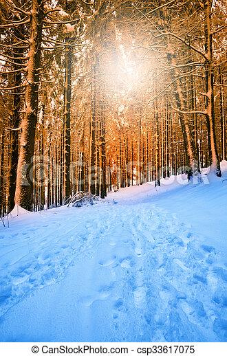 foresta, nevoso - csp33617075
