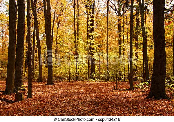 foresta, paesaggio, cadere - csp0434216