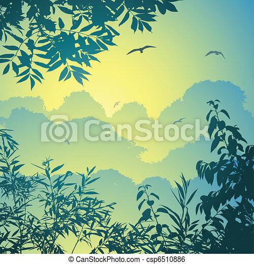 foresta, paesaggio - csp6510886