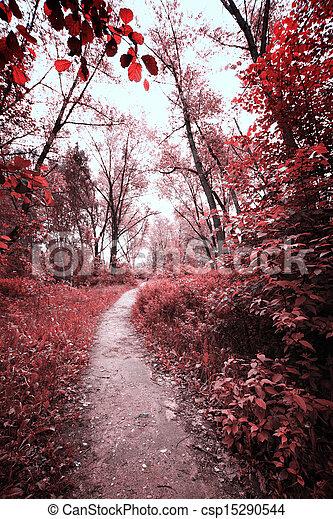 foresta, strada - csp15290544