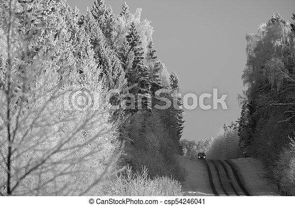 foresta, strada - csp54246041