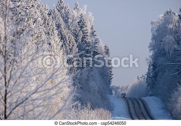 foresta, strada - csp54246050