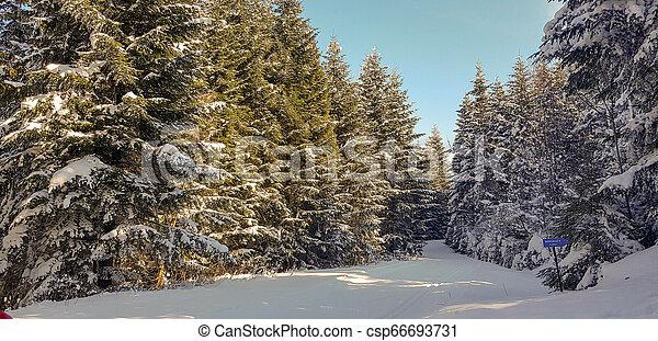 foresta, strada, inverno - csp66693731