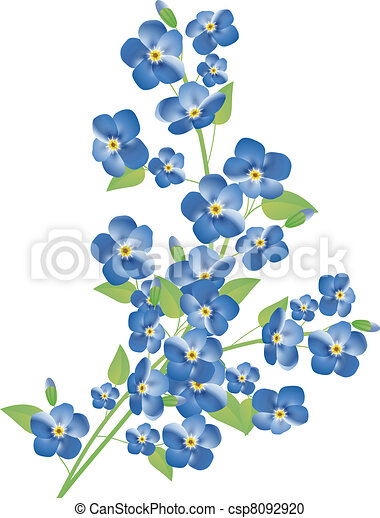 forget-me-not flowers - csp8092920