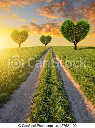 Forma coração, árvores. Coração, trigo, sujeira, primavera, árvores, campo, forma, paisagem., estrada, sunset.