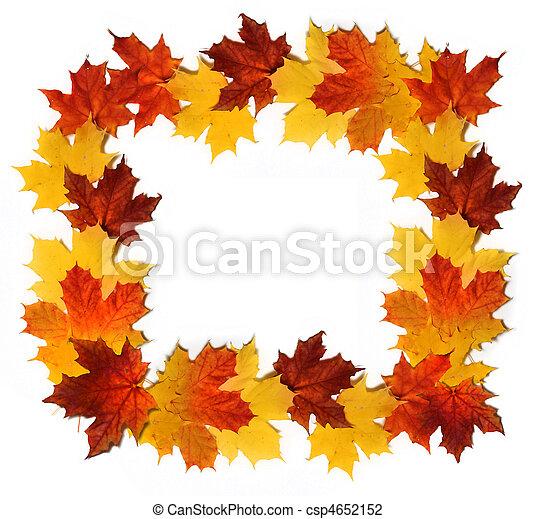 Hojas rojas y amarillas de otoño formando frontera aisladas de fondo blanco - csp4652152