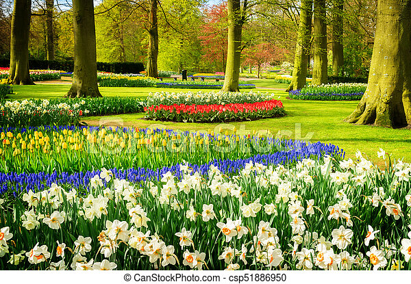 Formal spring garden colourful daffodils bluebells and tulips formal spring garden csp51886950 mightylinksfo