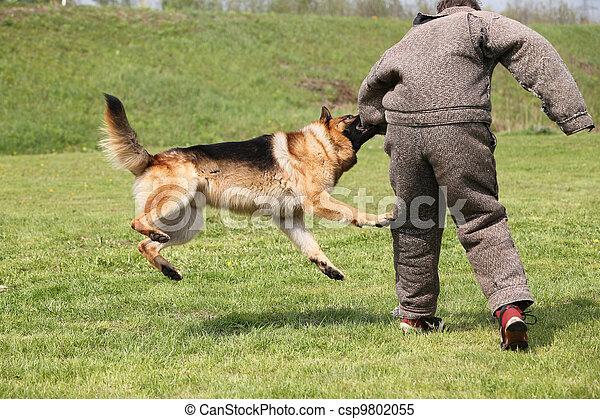 formation, chien - csp9802055