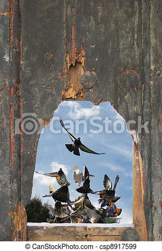 foro piccione, volare, porta, visto - csp8917599