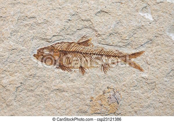 fossil fish - csp23121386