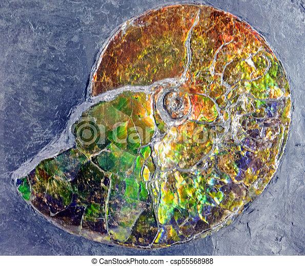 Fossilized Iridescence - csp55568988