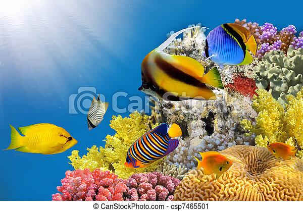 foto, coral, colonia, cima, arrecife - csp7465501