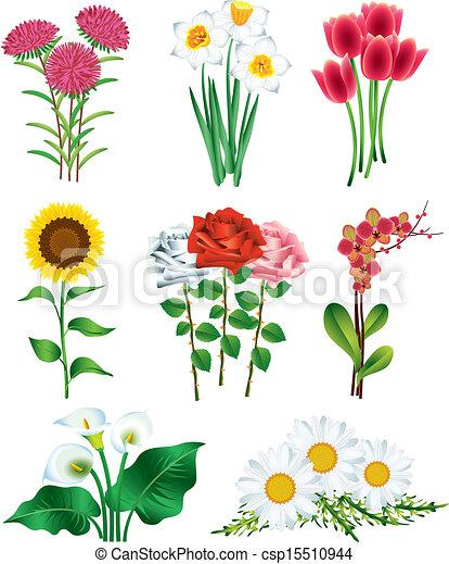 Foto Flores Vector Conjunto Realista Hermoso Conjunto Foto