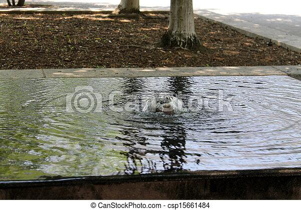 fountain - csp15661484