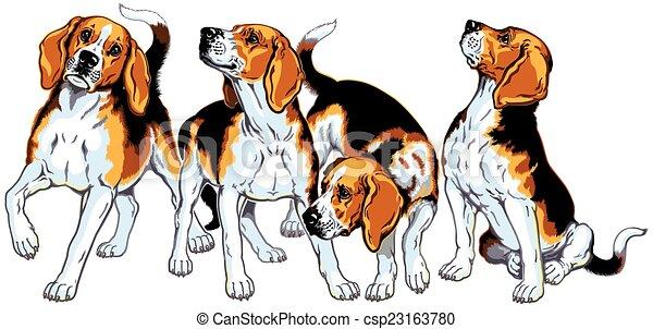 four beagles - csp23163780