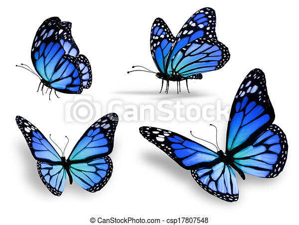 Four blue butterfly - csp17807548