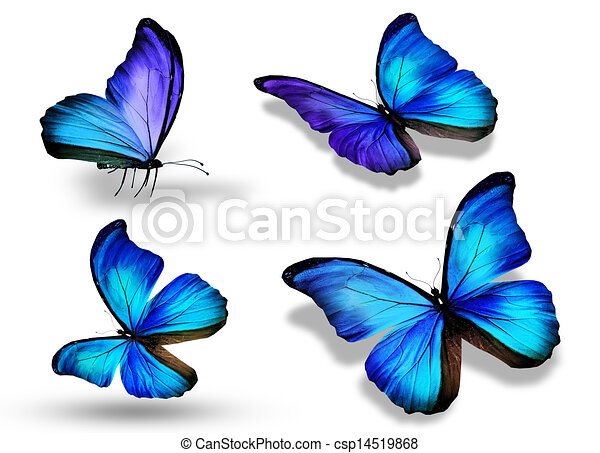 Blue Butterfly Stock Photo Images 45 103 Blue Butterfly Royalty
