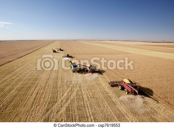 Four Combines in Field - csp7619553
