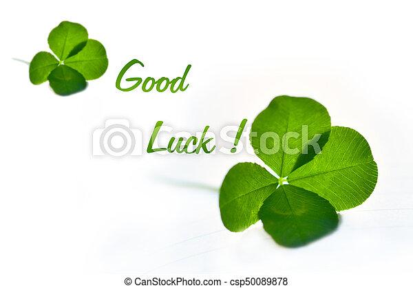 Four Leaf Clover For Good Luck
