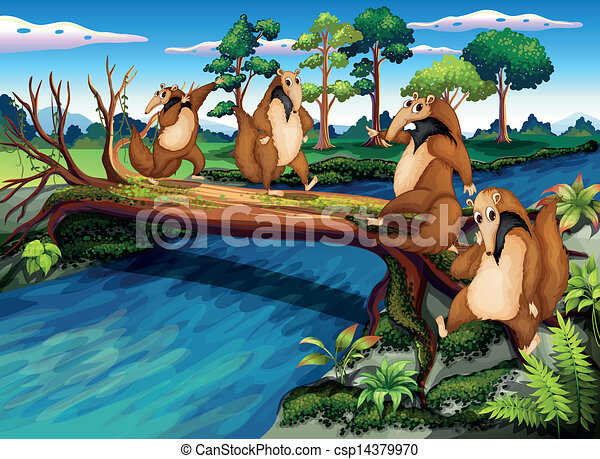 Four playful wild animals crossing the river - csp14379970