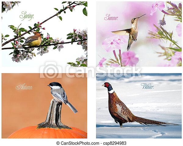 Four season bird collage. - csp8294983