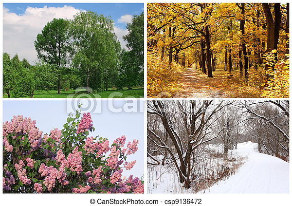 four seasons spring, summer, autumn, winter trees collage with white borders - csp9136472