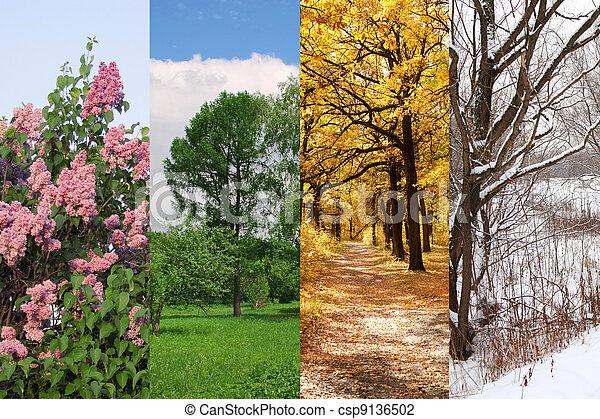 four seasons spring, summer, autumn, winter trees collage - csp9136502