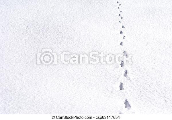 Fox foot animal tracks in the snow - csp63117654
