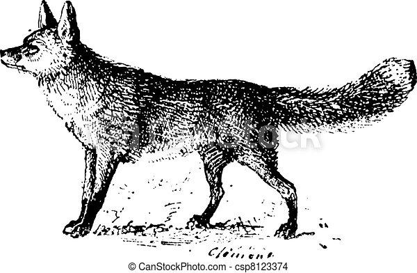 Line Drawing Fox : Fox vintage engraving. engraved illustration . eps