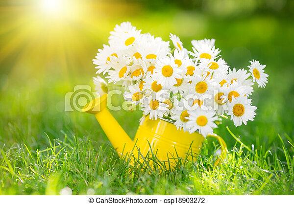 frühjahrsblumen - csp18903272