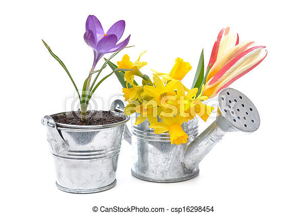 frühjahrsblumen - csp16298454