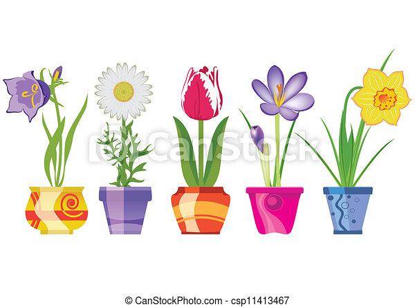 frühjahrsblumen, töpfe - csp11413467