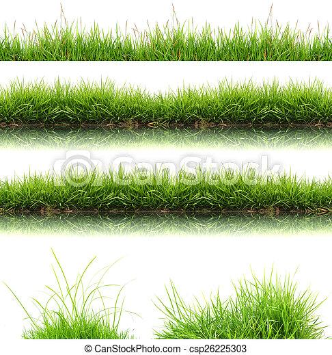 frais, herbe, isolé, vert, printemps - csp26225303