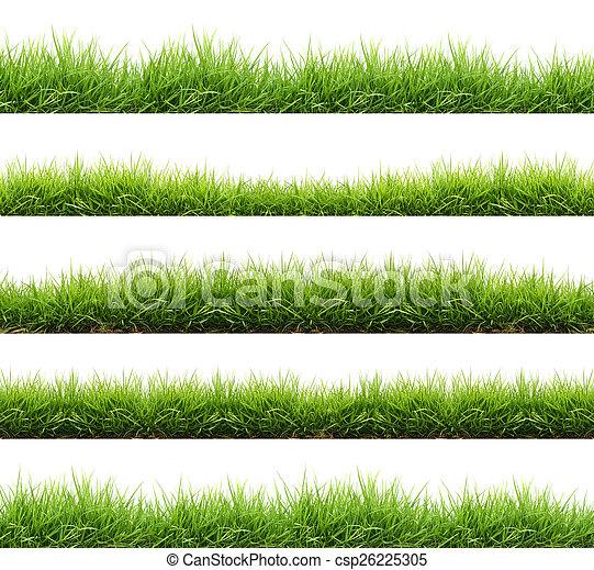 frais, herbe, isolé, vert, printemps - csp26225305