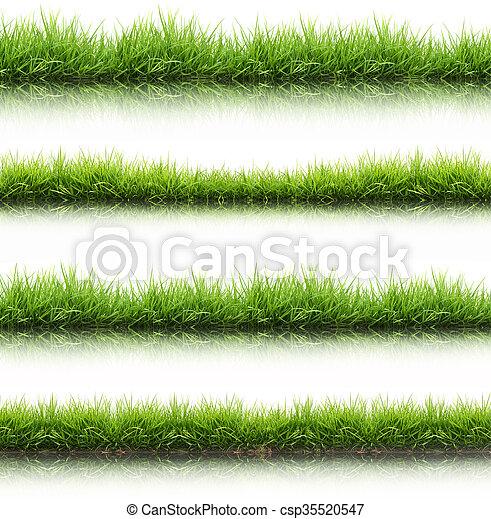 frais, herbe, isolé, vert, printemps - csp35520547