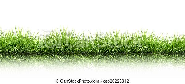 frais, herbe, vert, isolé, printemps - csp26225312