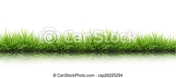 frais, herbe, vert, isolé, printemps - csp26225294
