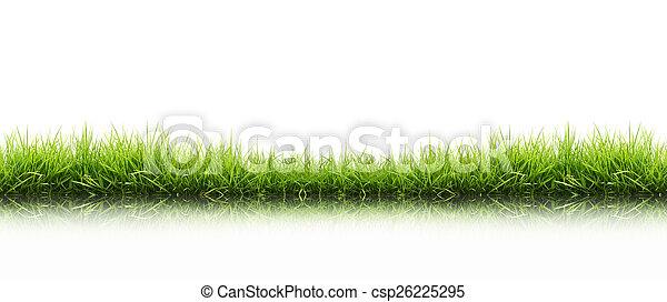 frais, herbe, vert, isolé, printemps - csp26225295