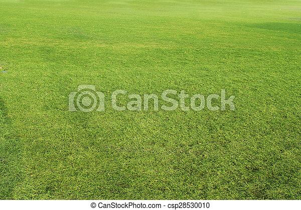 frais, herbe, vert, printemps - csp28530010