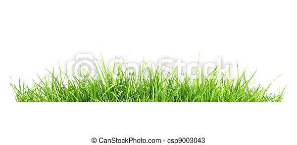 frais, herbe, vert, printemps - csp9003043