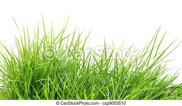 frais, printemps, herbe, vert - csp9003510