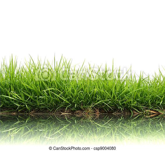 frais, printemps, herbe, vert - csp9004080