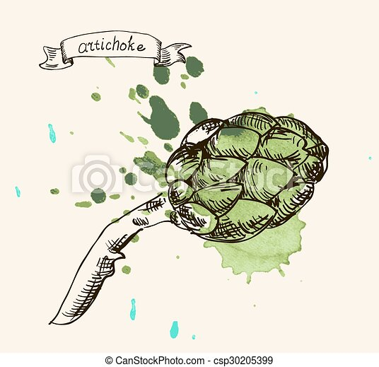 frais, vert, eco-amical, utile, artichaut - csp30205399