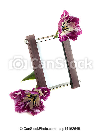 Frame and tulips on a white background - csp14152645