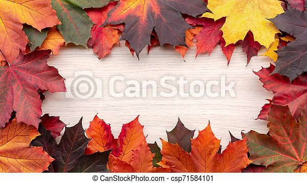 Frame of autumn maple leaves on a white wooden background - a beautiful template for an autumn card or congratulations - csp71584101