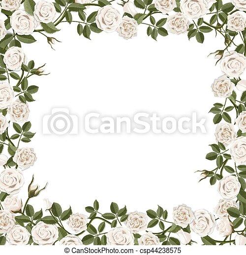 Frame of blossom white rose flowers. Square frame of white blossom ...